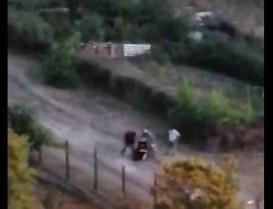 Sokak hayvanlarını besleyen kadına uygulanan şiddet kameralara yansıdı
