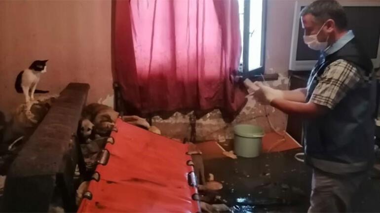 20 kedi ve 10 köpeğiyle yaşayan 70 yaşındaki Mukaddes Pehlivan Yağmurda zarar  gören evini boşaltmak istemedi