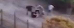 Başakşehir'de belediyeye ait arazide sokak köpeklerine mama vermek isteyen bir kadın öğretmen, iki kişinin saldırısına uğradı